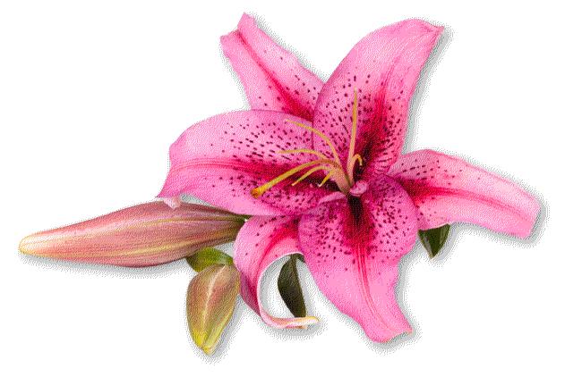 Lanshire Floral Design Wedding Flowers Orporate Flower